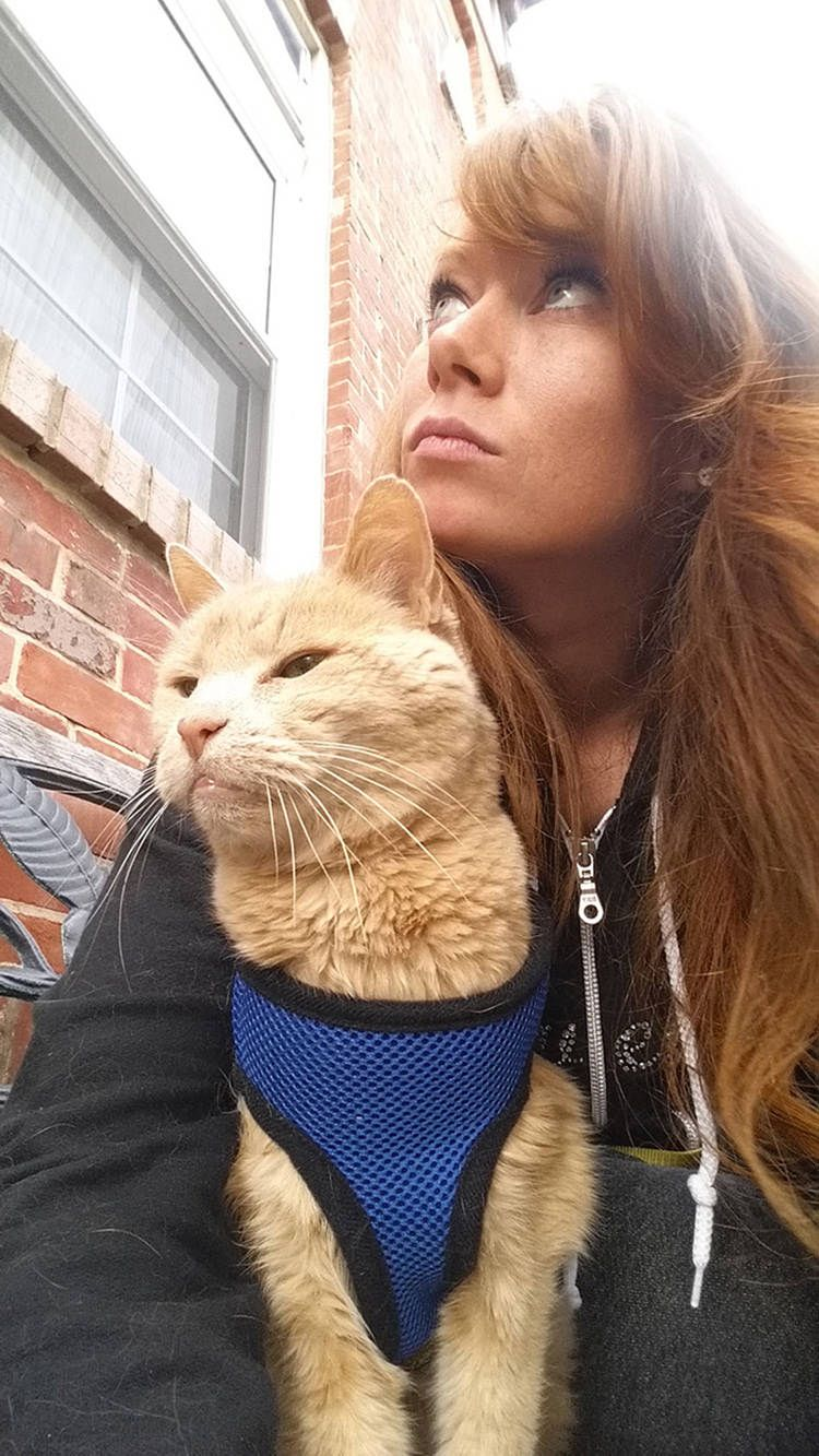 Woman Adopts 21 Year Old Cat Abandoned By Owner Creates Bucket List Full Of Adventures Old Cats Sick Cat Cats