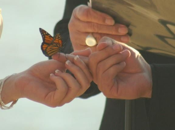 Wedding Ceremony Butterfly Release Ideas For Brides Grooms Parents