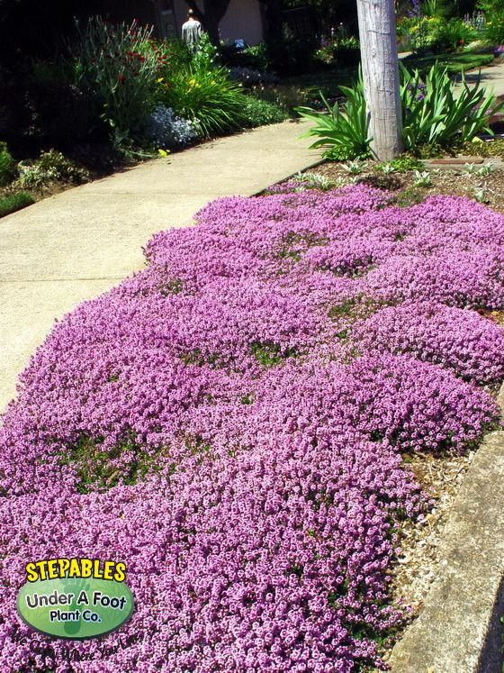 pin stepables curbside plantings