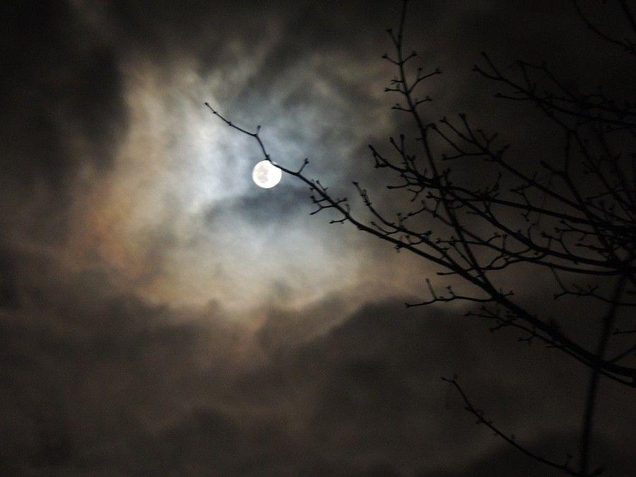 Vroege Vogels: zie de maan schijnt achter de wolken