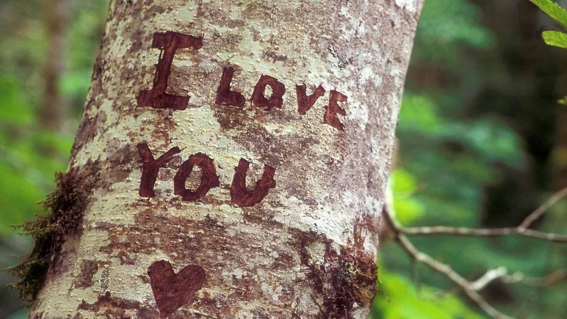 Love Nature Quotes Pesquisa Google Com Imagens Jorge E