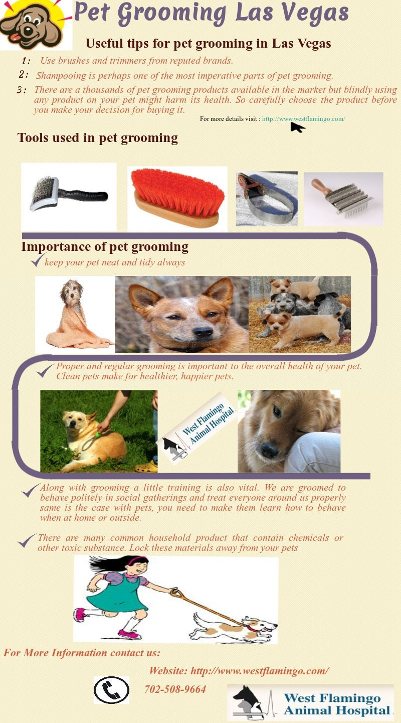 Some useful tips for pet grooming in Las Vegas More