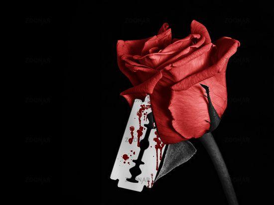 Pin On Rose
