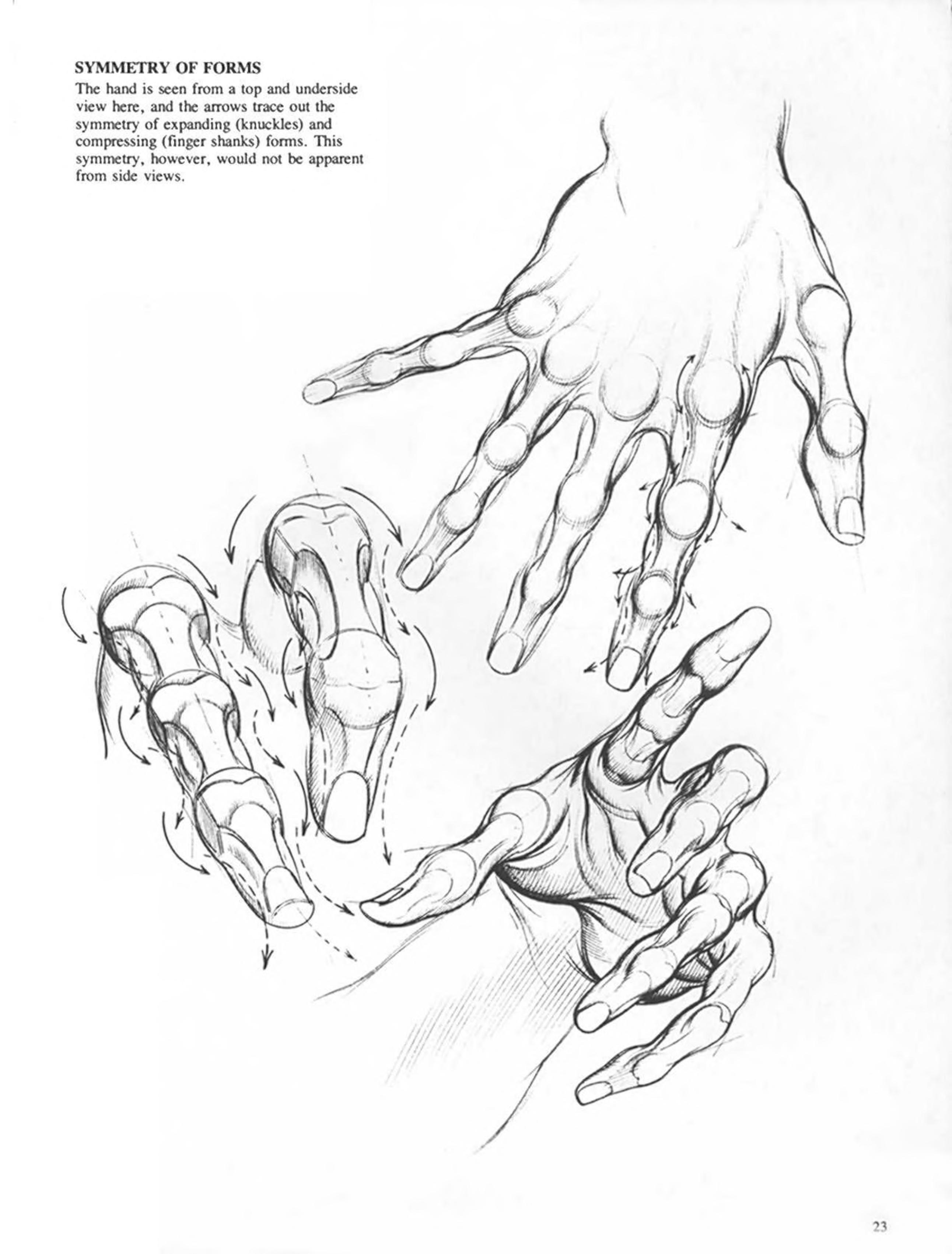 Burne Hogarth Drawing Dynamic Hands By Burne Hogarth Publication