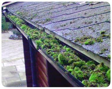 Gutter Cleaning Brighton Friendly And Affordable Cleaning Gutters Roof Maintenance Gutters