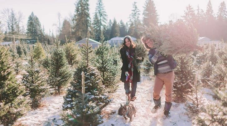 Where To Buy Live Christmas Trees Gallery Check more at ...