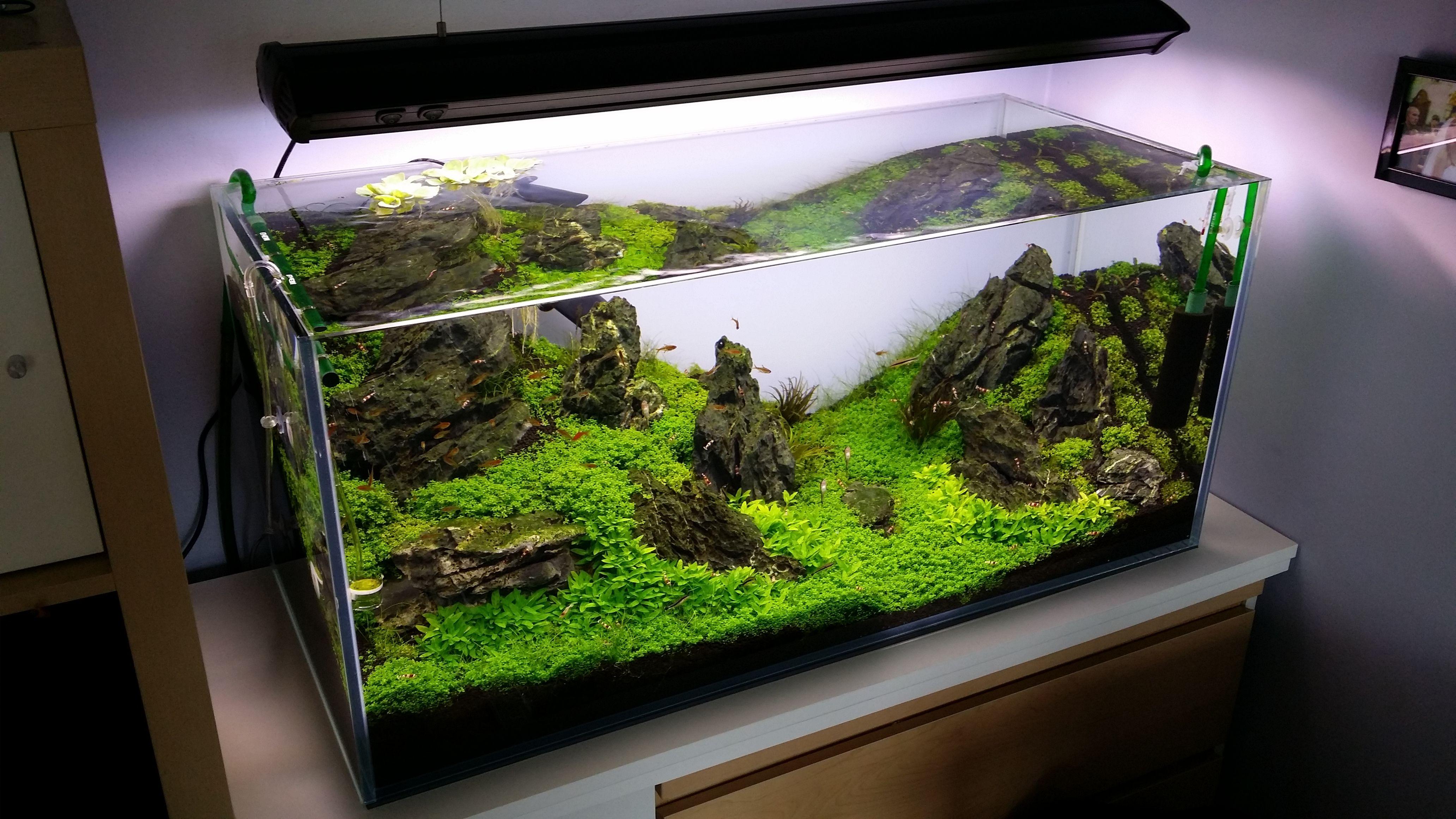 Iwagumi 200l by micha tyrkalski flora hemianthus for Aquarium 200l
