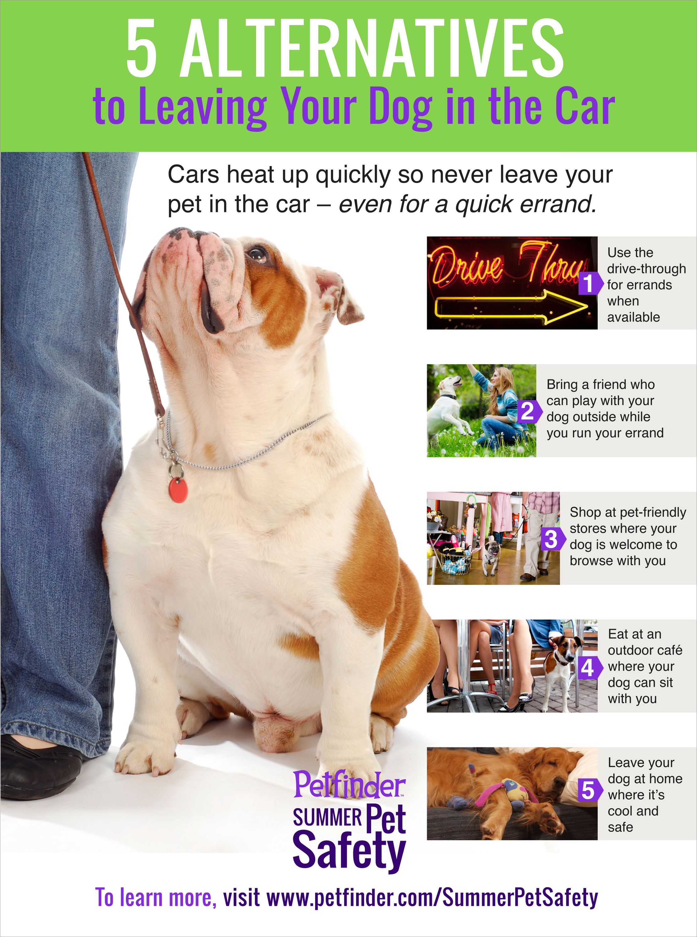 Gallery 5 Alternatives To Leaving Your Dog In The Car