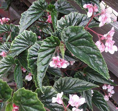 Plantas De Interior Plantas De Sombra Plantas De Exterior
