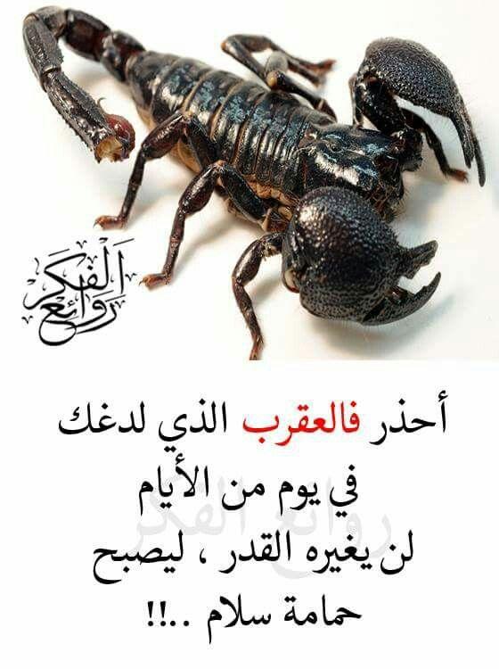 Desertrose Exactly Wisdom Quotes Life Arabic Quotes Words Quotes