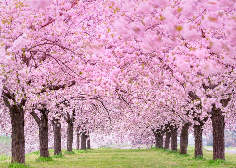 Spring Pink Flower Backdrop Sakura Floral Theme Parties Photography Background Egzotik Cicekler Egzotik Cicek