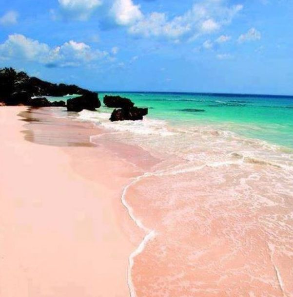 Pinkest Beach In Bermuda