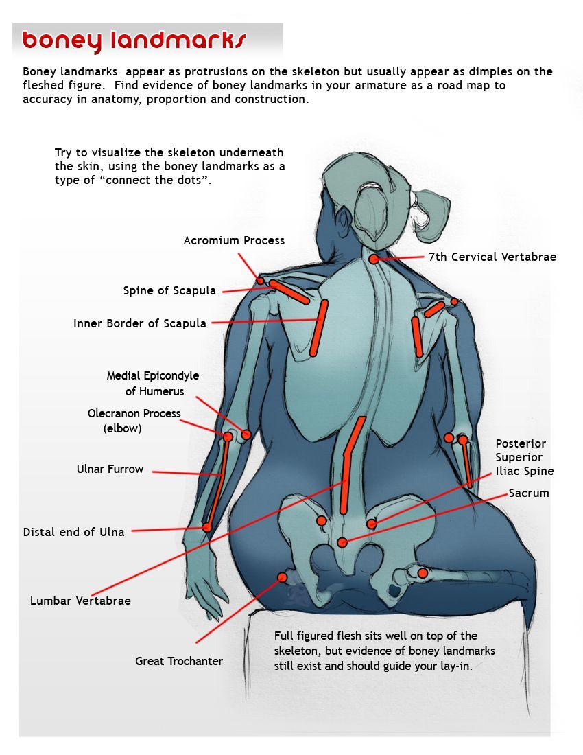 Bony landmarks example Upper-body Lower-body Arms | PRM Final ...