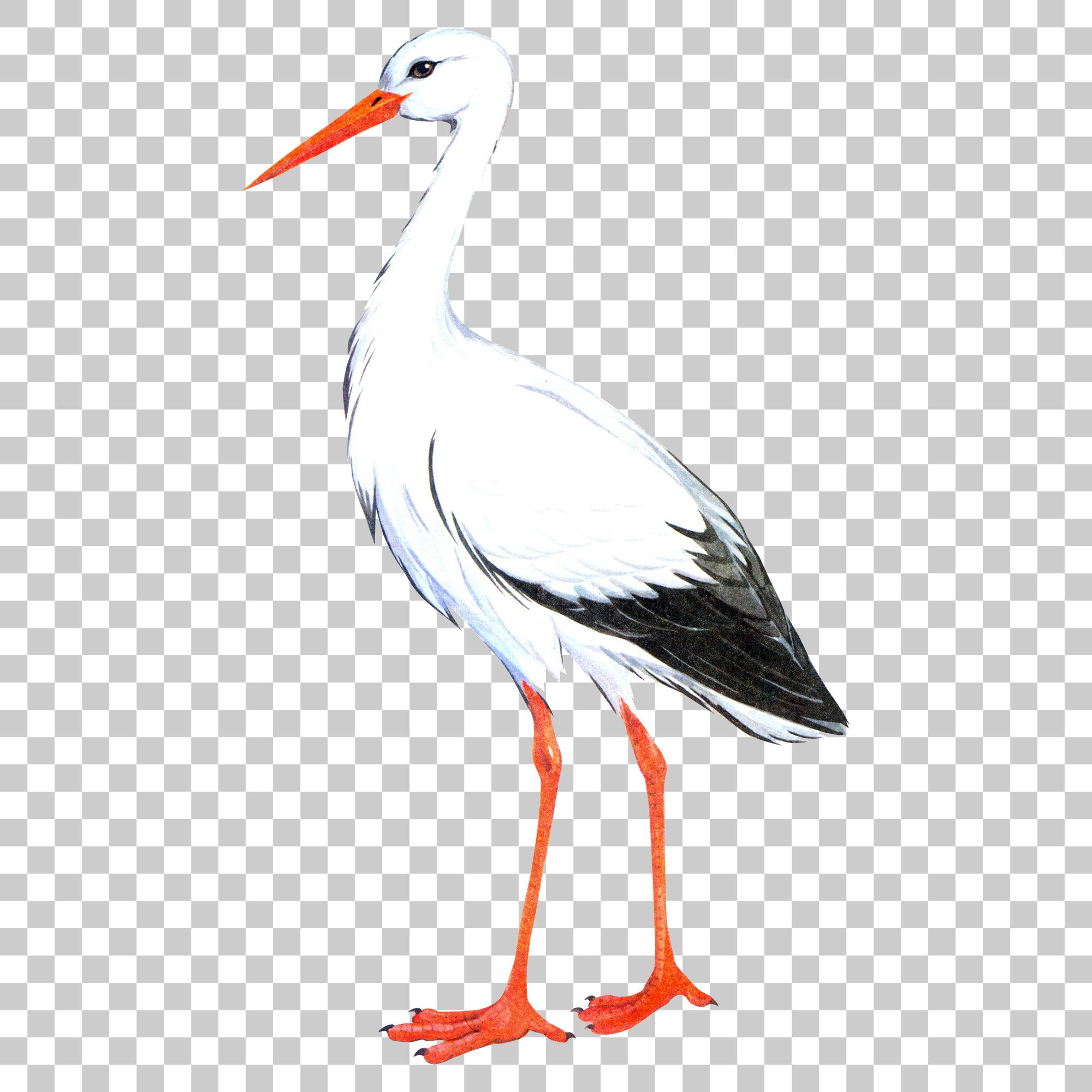 Crane Stork Bird Png Image With Transparent Background Stork Bird Bird Png Images