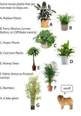 Dog-safe potted house plants for inside your home | Cat safe ... on