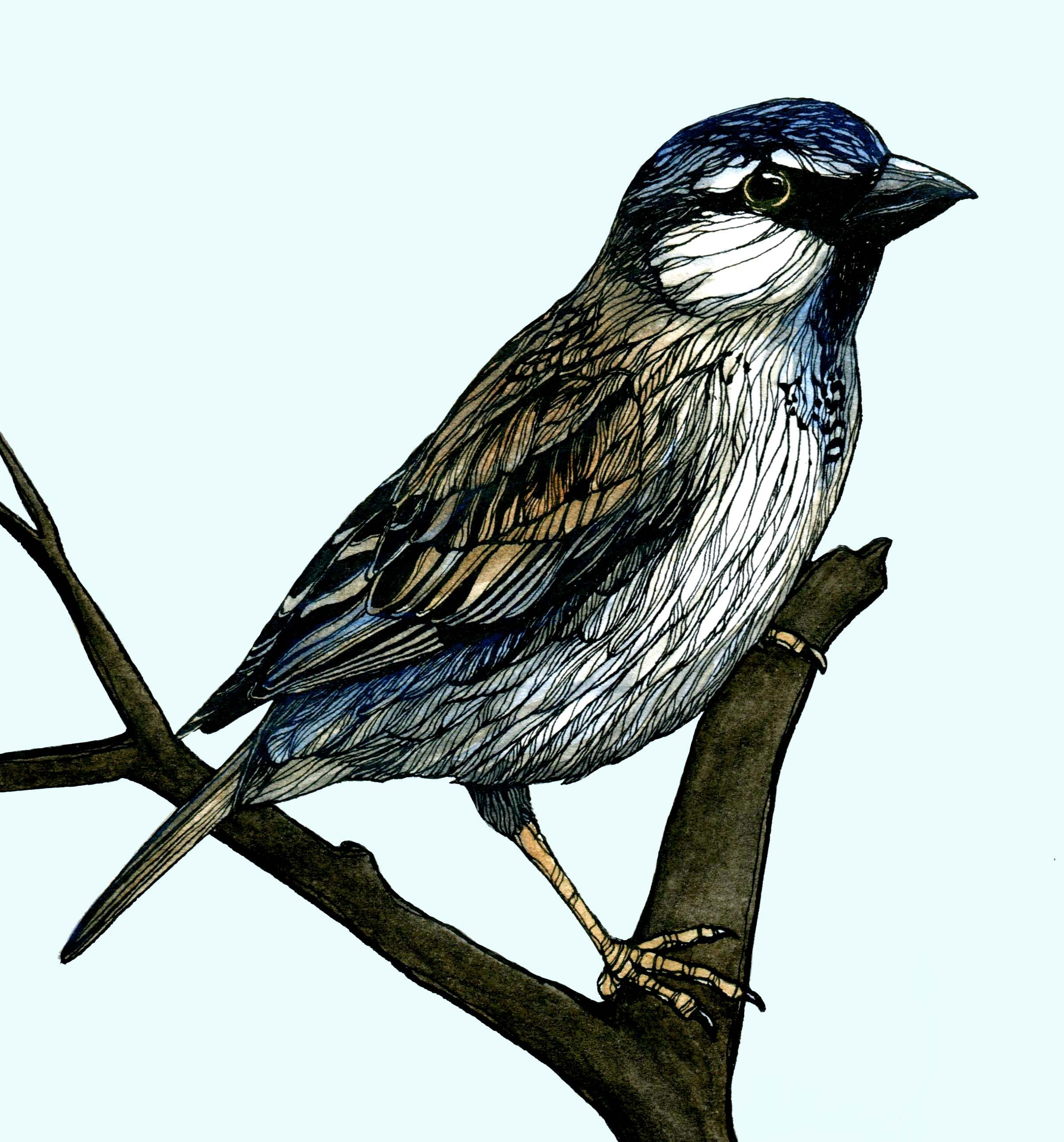 Small bird drawing pen and ink watercolour watercolor for Small art drawings