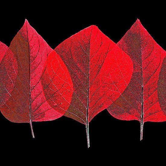 Marcia Batoni - Artes Visuais: Banco de Imagens - Vermelho