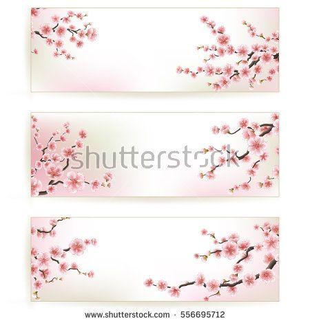 Sakura, Cherry Blossoming Tree Background Illustration Set of - fresh invitation banner vector