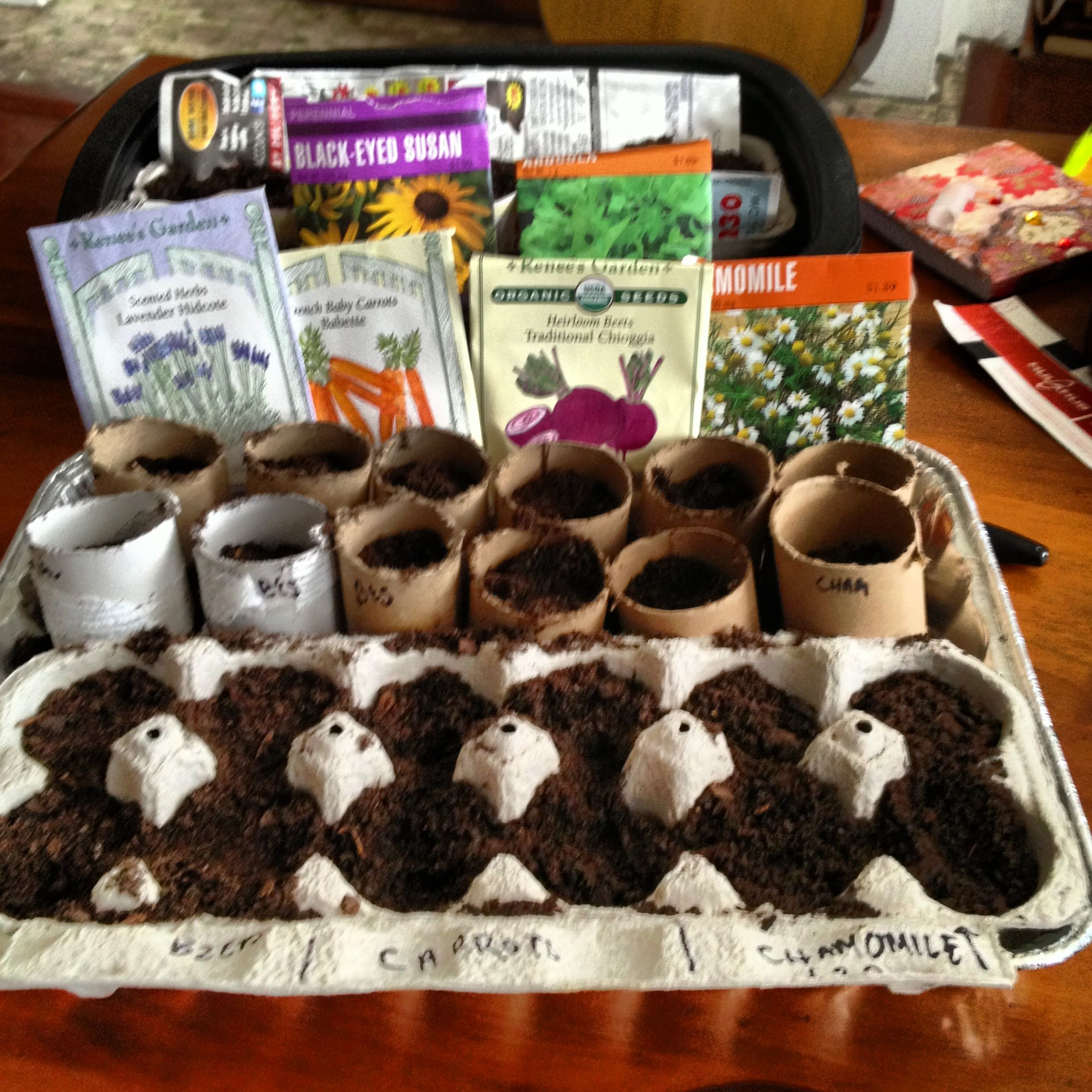 an easy diy seed starting kit just use egg cartons or toilet paperpaper