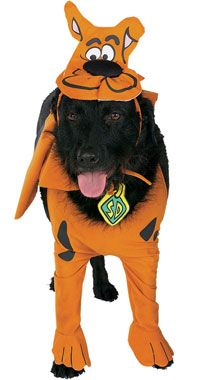 Dogs Wearing Dorky Costumes Scooby Doo Dog Costume Scooby Doo