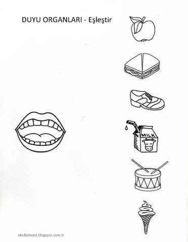 Duyu Organlarımız Boyama Sayfaları Eşleştirme