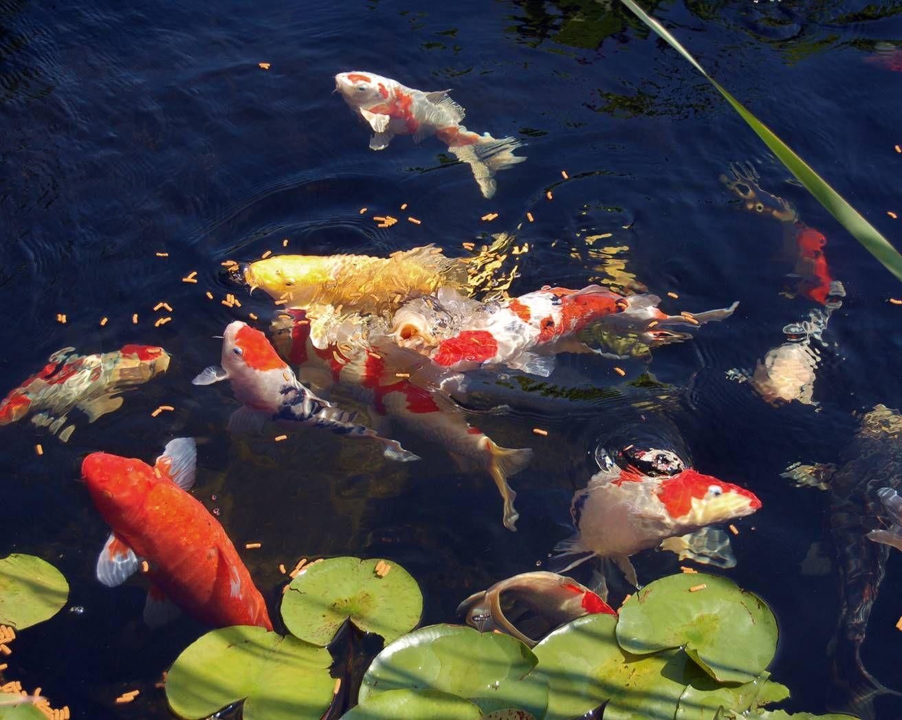 Рыбы в водоеме картинки