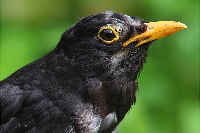 Die Nabu Naturtipps Fur Den Monat Marz Tiere Pflanzen Und Augen