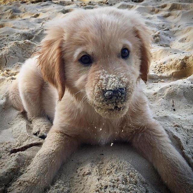 Unterra Dogs Puppies Cute Puppies Cute Animals