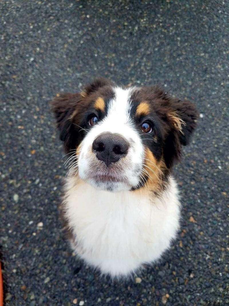 Nautiisbetter Dog portraits, Animals, Dogs