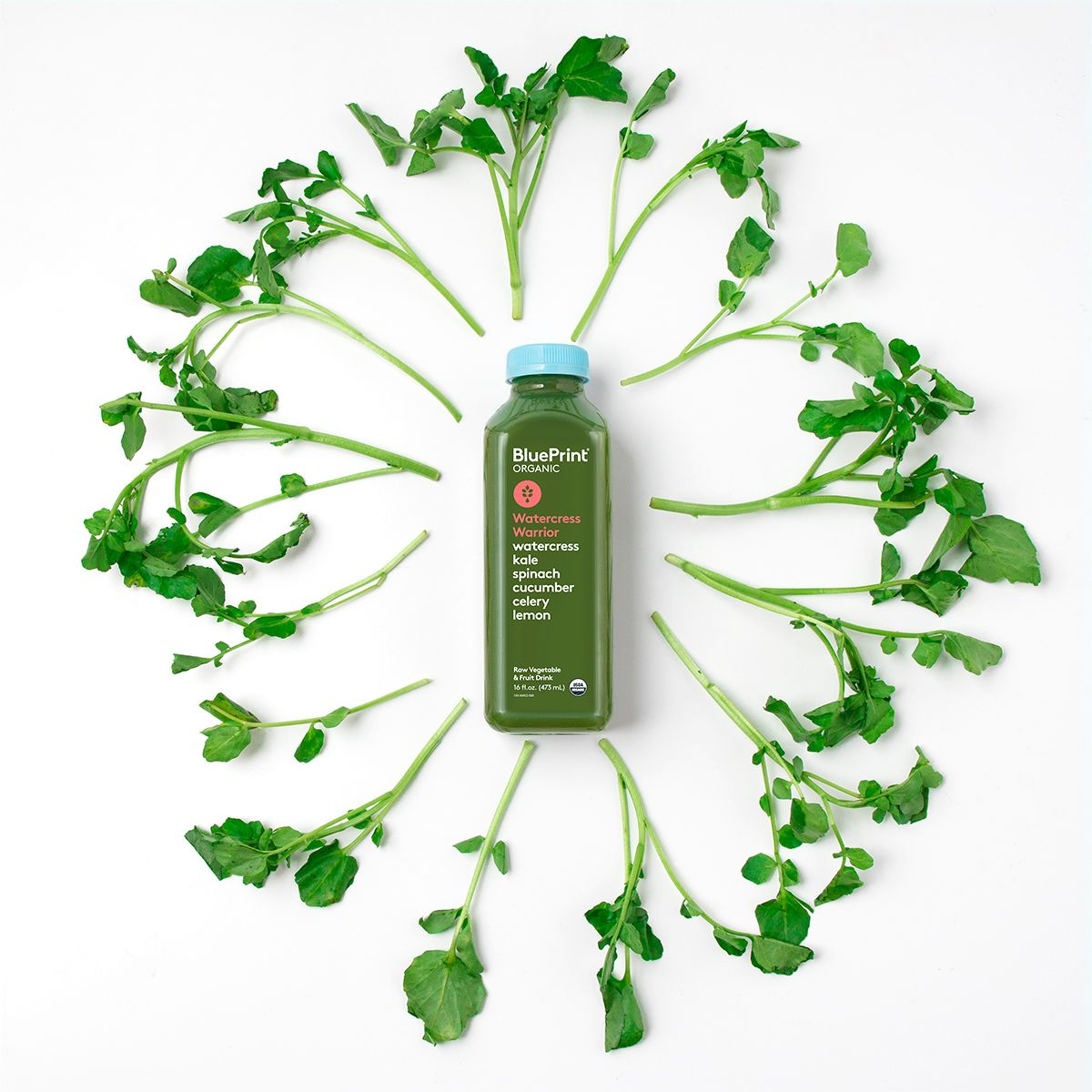 We fit a lot of greens in one bottle so you can fit a lot of living watercress warrior blueprint cleanse malvernweather Images