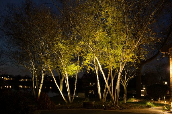 Uplights On A Grove Of Trees Landscape Lighting Outdoor