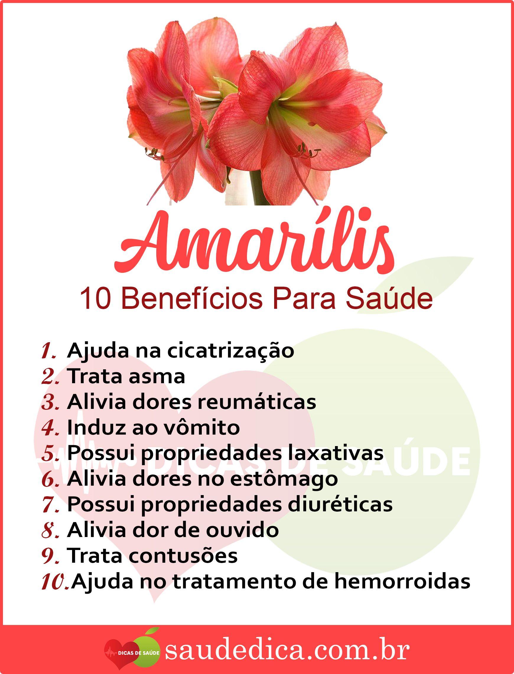Beneficiosa Da Amarilis Para Saude Amarilis