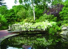 52fcdd5d7e6eeeb7e28c3fe853c5a143 - Pine Lodge Gardens St Austell Cornwall