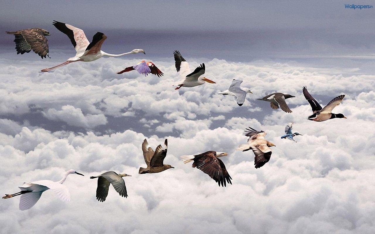 animals high definition birds and animals wallpaper index