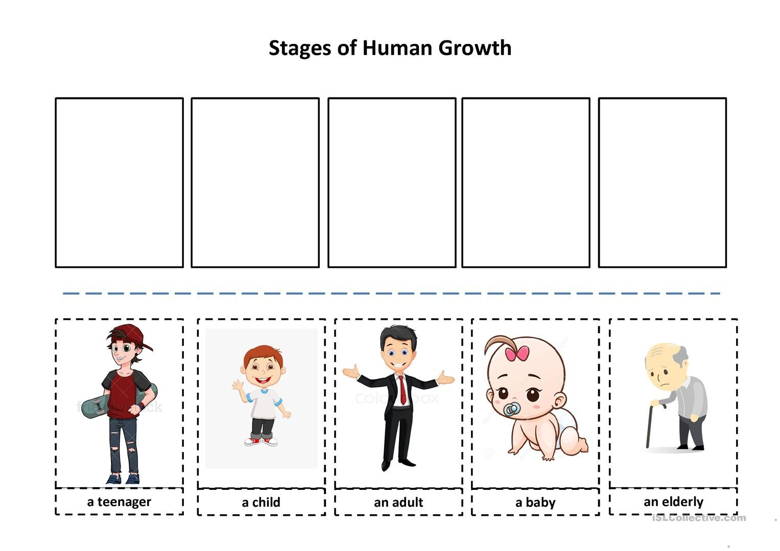 Stages Of Human Growth