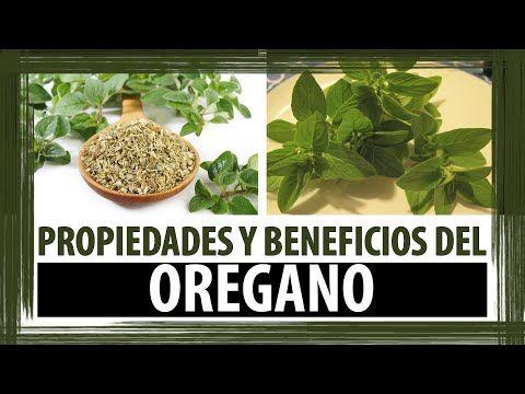 PARA QUE SIRVE EL OREGANO | PROPIEDADES Y BENEFICIOS DEL OREGANO - YouTube