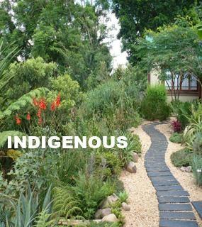 Image Result For Indigenous Urban Gardens South Africa Garden