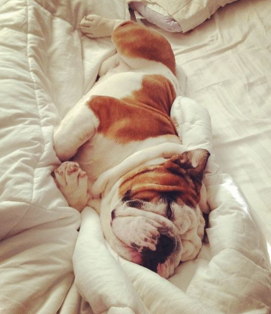 Comfy And Why Not It S Mom S Bed Baby Dogs