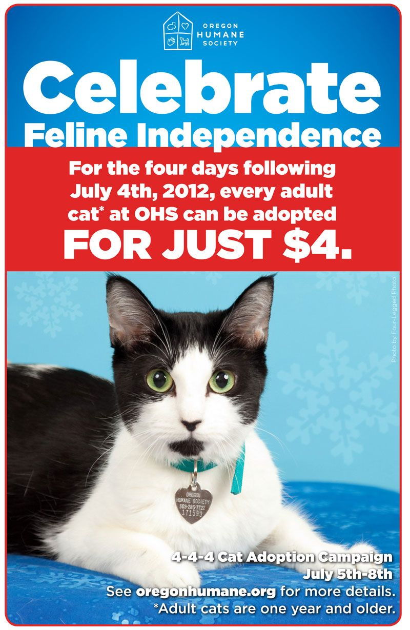 Adoption special on adult cats runs through Sunday, July
