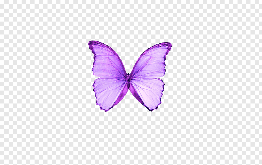 Butterfly Purple Color Moth Dream Purple Butterfly Png Purple Butterfly Butterfly Illustration Butterfly Black And White