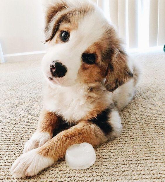 Neun Lieblingssachen. - #Lieblingssachen #Neun #whatkindofdog