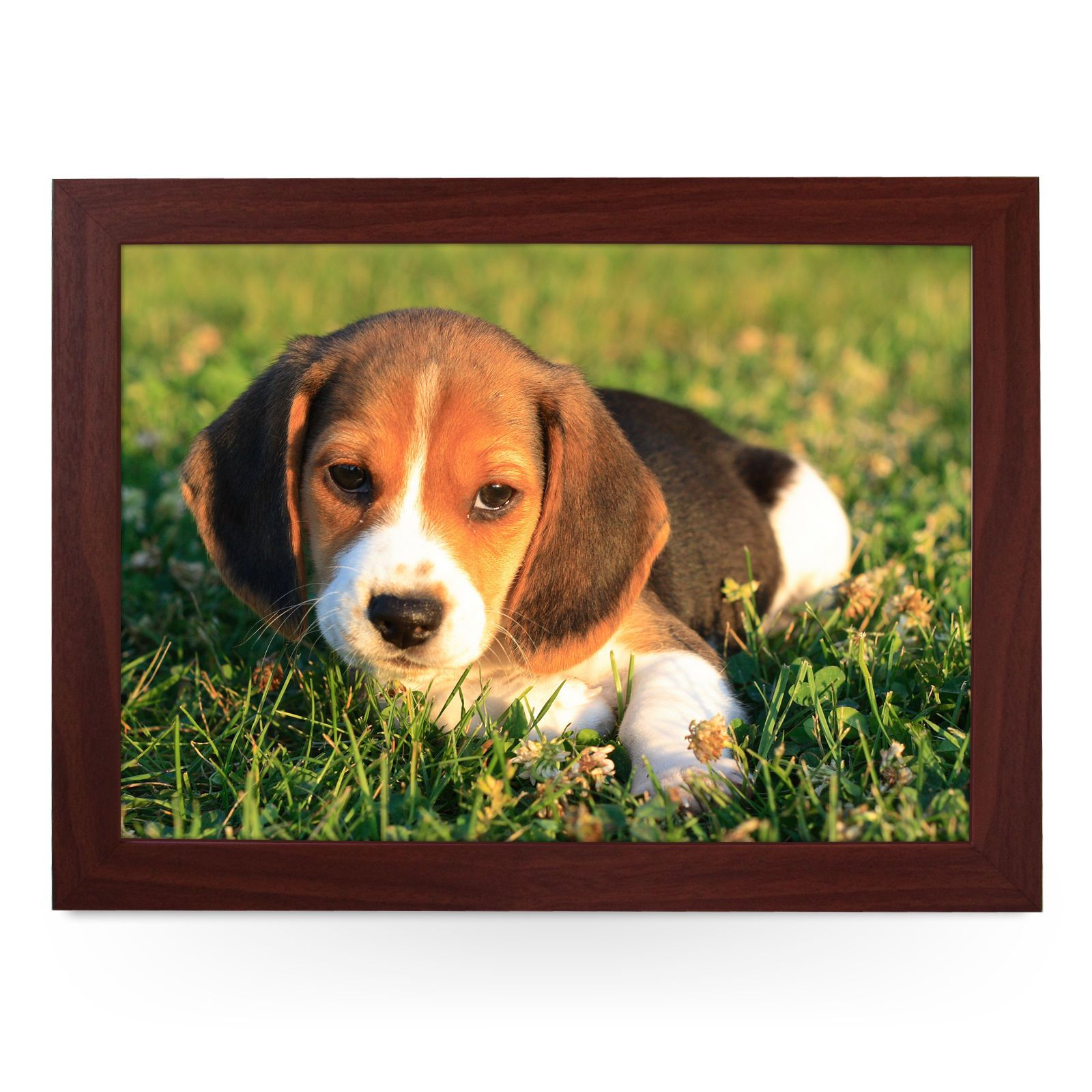 Beagle Puppy Personalised Padded Lap Tray Laptray L0159