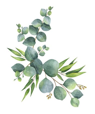 Photo of Watercolor vector wreath with green eucalyptus leaves and branches ….