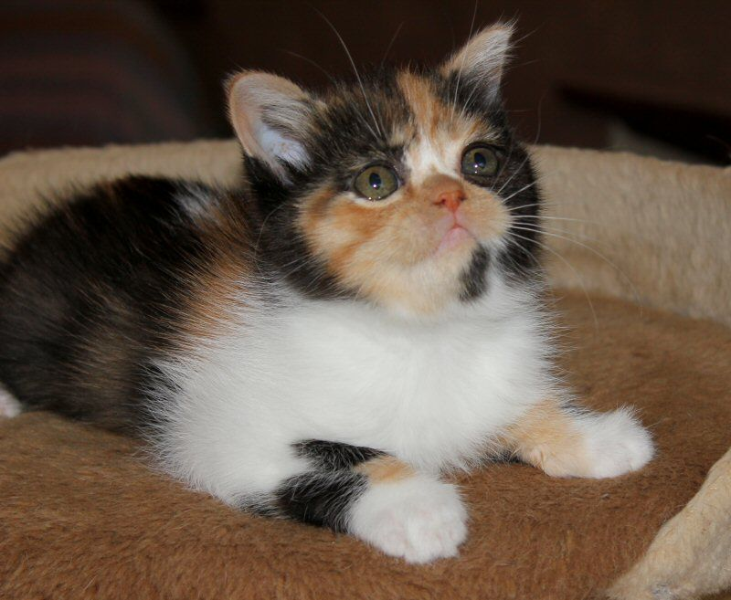 Cute Pet Pictures, Pics: Kittens, Cat, Cats, Piglets, Dogs, Puppies, Pets & Animals