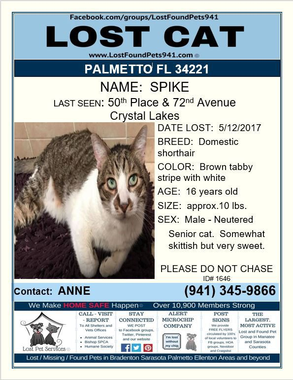 Have You Seen Spike Lostcat Lost Cat Tabby Palmetto Fl Manateecounty 34221 Lostpetservices Lostfoundpets941 Shar Losing A Pet Service Animal Lost Cat