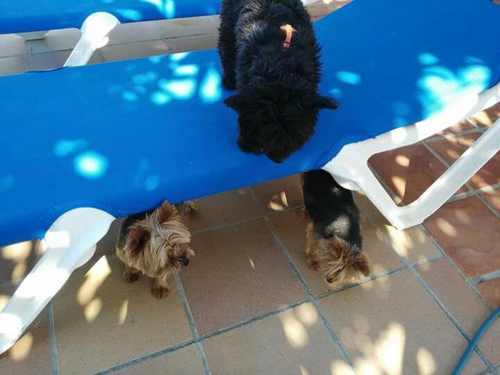 Ratos en casa 07/16 Keka, Chico, Mini