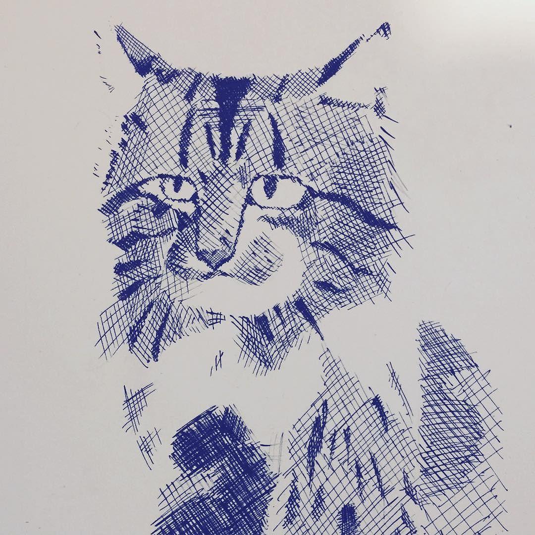 #cat #illustrator #illustration #pen #kitty #kitten #drawing #sketch #crosshatching #crosshatch #art #artist #meow #pet #feline #likeforlike