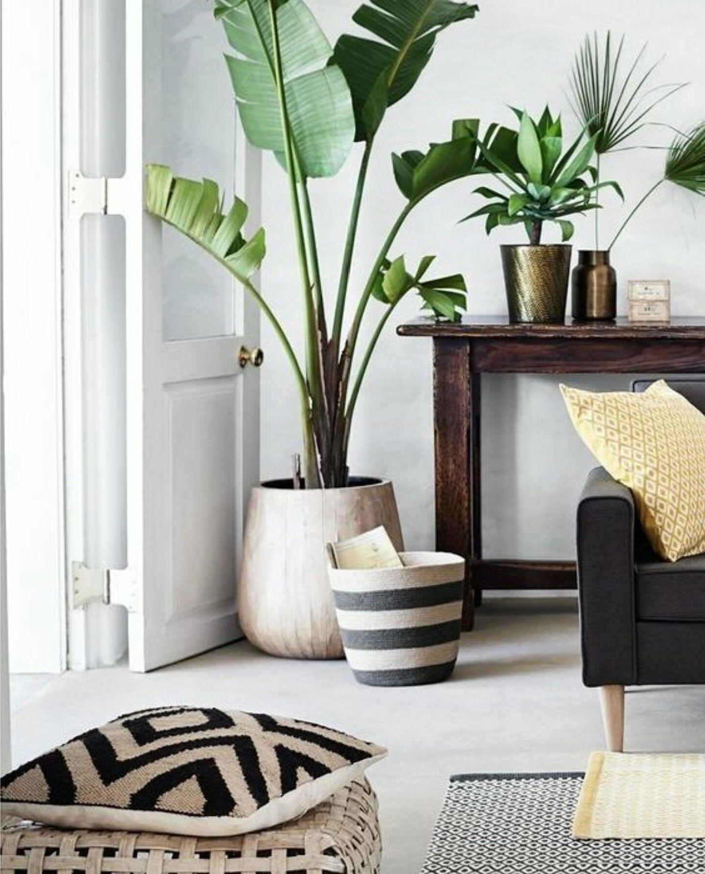 Pin von Mod Wood Art auf MODERN | House Plants | Pinterest
