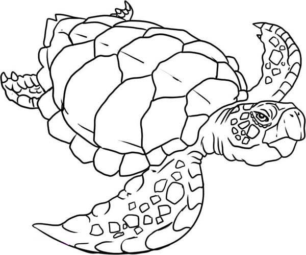 Old sea turtle coloring pages | line art | Pinterest | Turtle