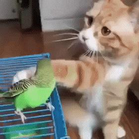 Cat petting parakeet    Contemporary GIFs    #funny #gifs #lol #memes